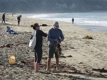pelican california surfrider beach cleanup