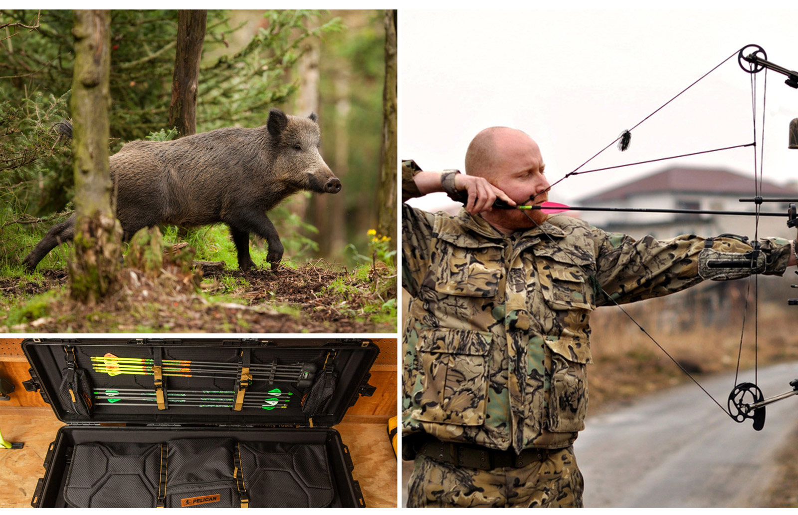 pelican consumer blog stalk shooting wild hog hunt
