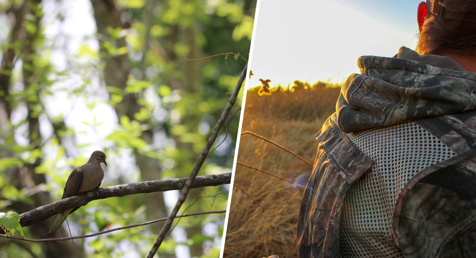 pelican consumer blog get started with dove hunting