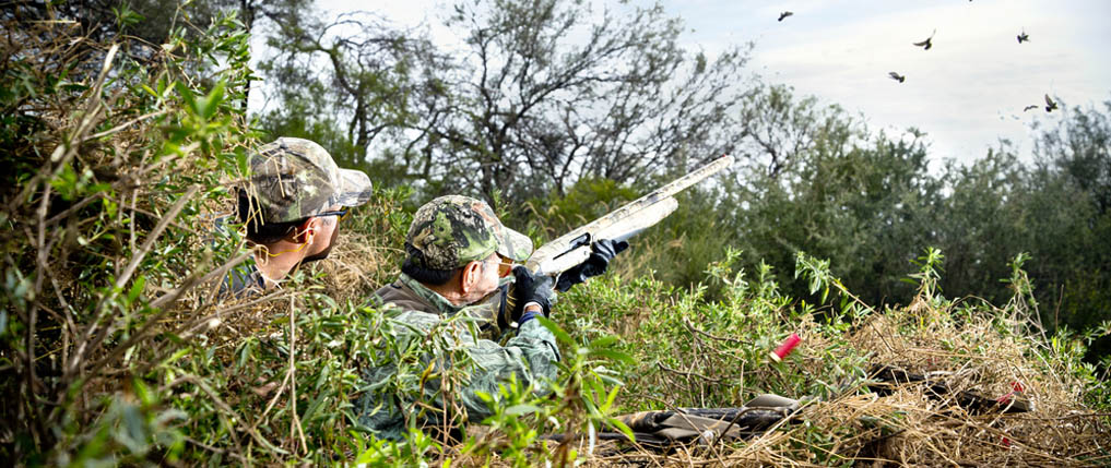 how to dove hunt
