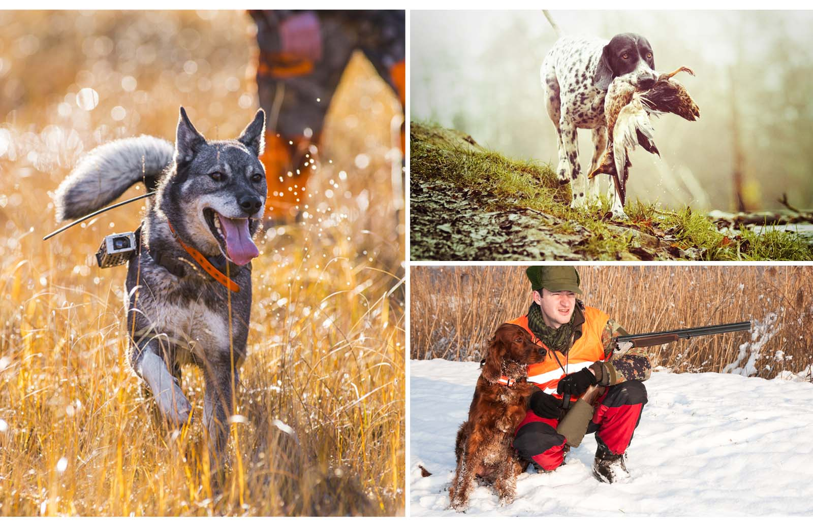 best dog for hunting