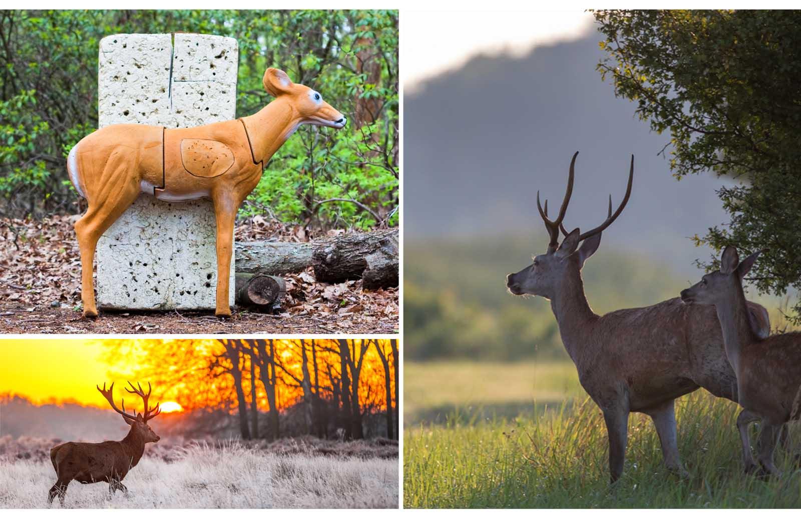 deer hunting targets